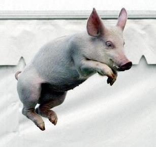 flying-pig.jpg